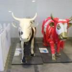 Cow Parade (Inek Festivali) Istanbul