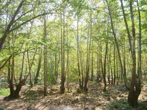 Delmece yaylasi-orman