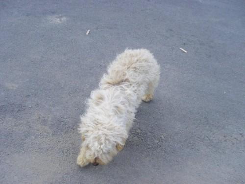Saldırgan Köpek- Kıbrısta