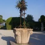 Villa_efrussi_de_Rotzchild_2009