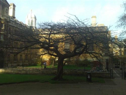 Cambridge (16)
